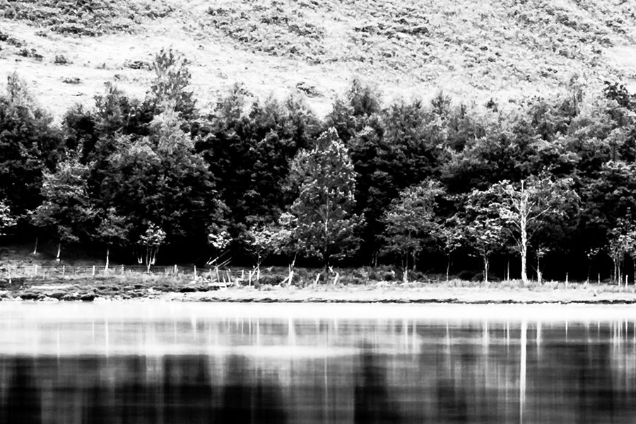 Buttermere Copse Black and White Detailed View 100%