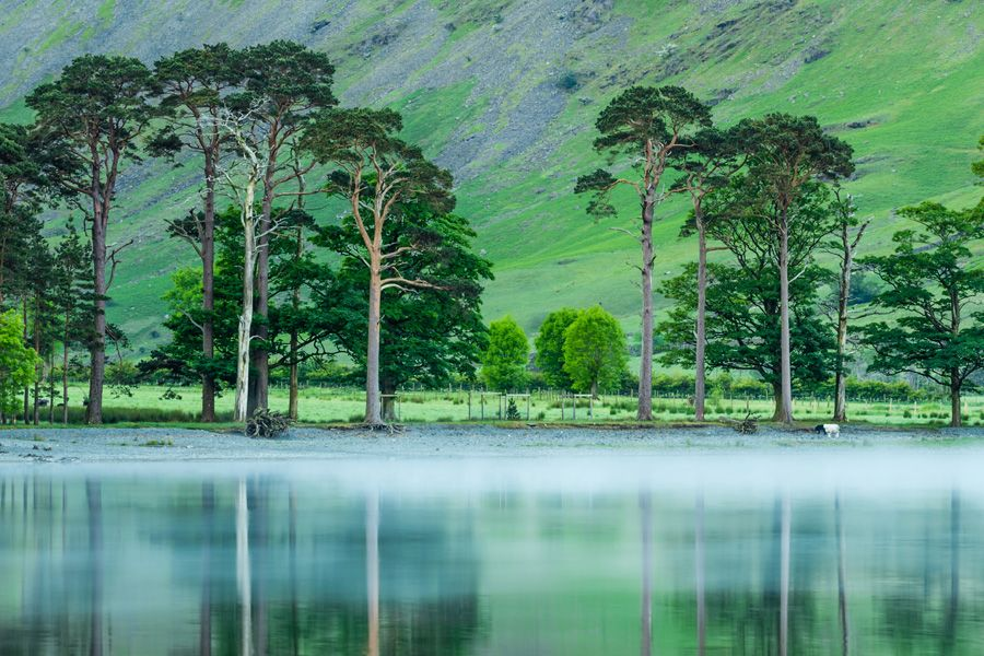 Buttermere-Trees-Mist-Lake District-Print