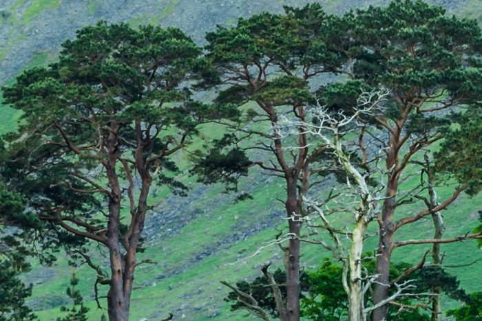 Buttermere Trees Mist Landscape Zoomed in to 100% Detail