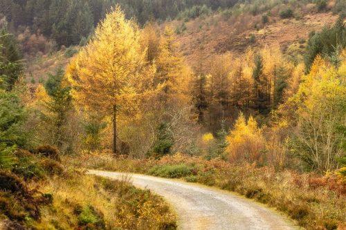 Autumn on Arran Photography Prints