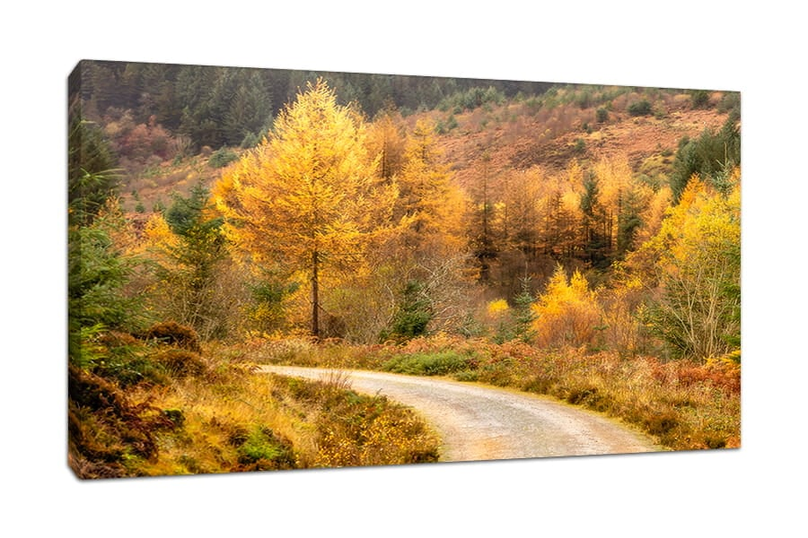 Autumn on Arran Canvas Print