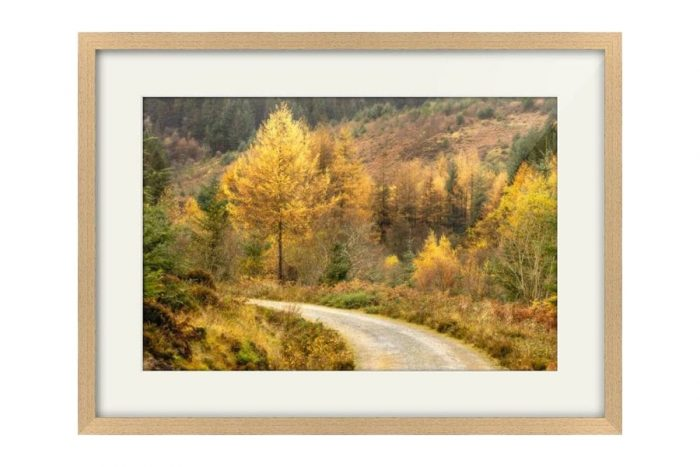 Autumn on Arran Oak framed print