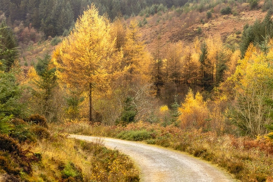 Autumn on Arran Photography Prints
