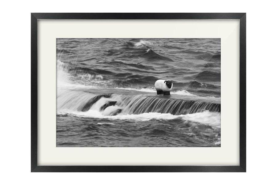 Corrie Sheep Arran Black framed Print