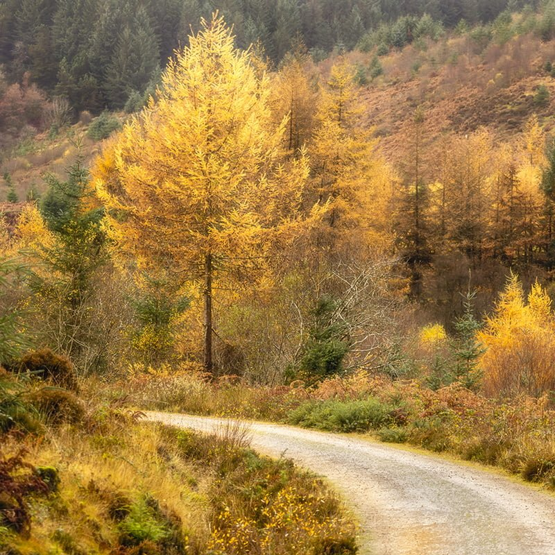 Arran Glenashdale Autumn Trees Square Crop Print Only