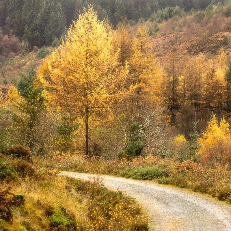Arran Glenashdale Autumn Trees Square Crop Print Only
