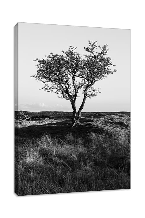 Dumfries and Galloway Lone Tree Portrait Style Canvas Print