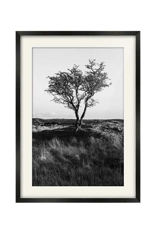 Galloway Lone Tree Black Framed Print