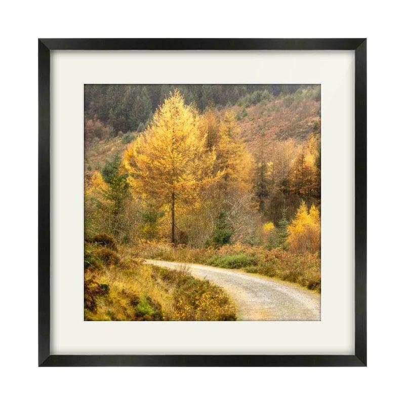 Glenashdale Autumn Arran Black Framed Print Square Crop