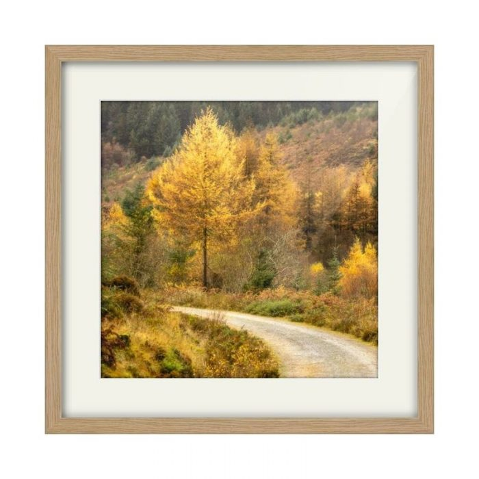 Glenashdale Autumn Arran Oak Framed Print