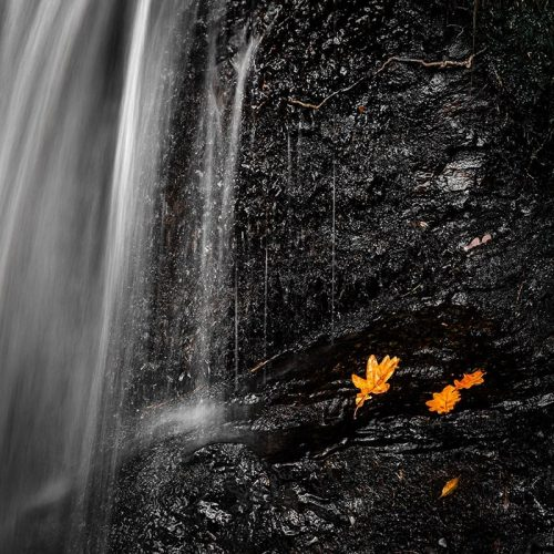 Leaf Waterfall Colour Pop Square Crop Print Only