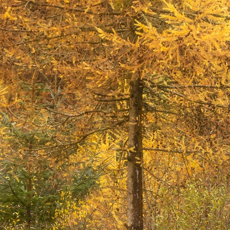 Autumn on Arran near Gleashdale Falls 100% Detail View