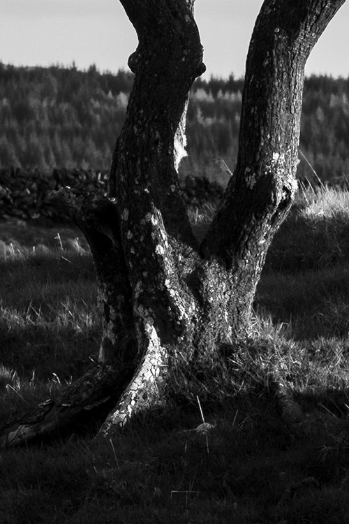 Galloway Lone Tree Close Up of Image Quality